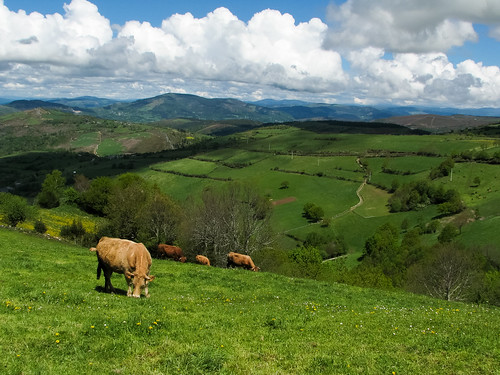 españa paisajes primavera spain galicia lugo caminodesantiago vacas ancares prados 2011 flaga ph232 canonps etapaocebreirotriacastela pedrafitadocebreiro pverde