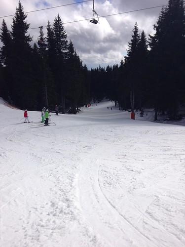snow sunshine treelined pamporovo crystalski