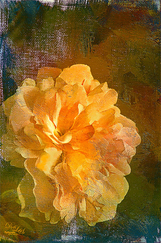 Image of an orange silk flower with texture applied