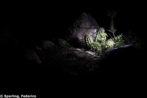 Night and Flashlight
