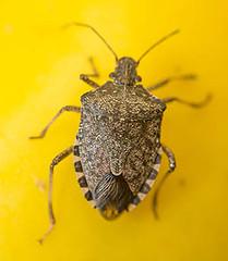 Bug-300-4