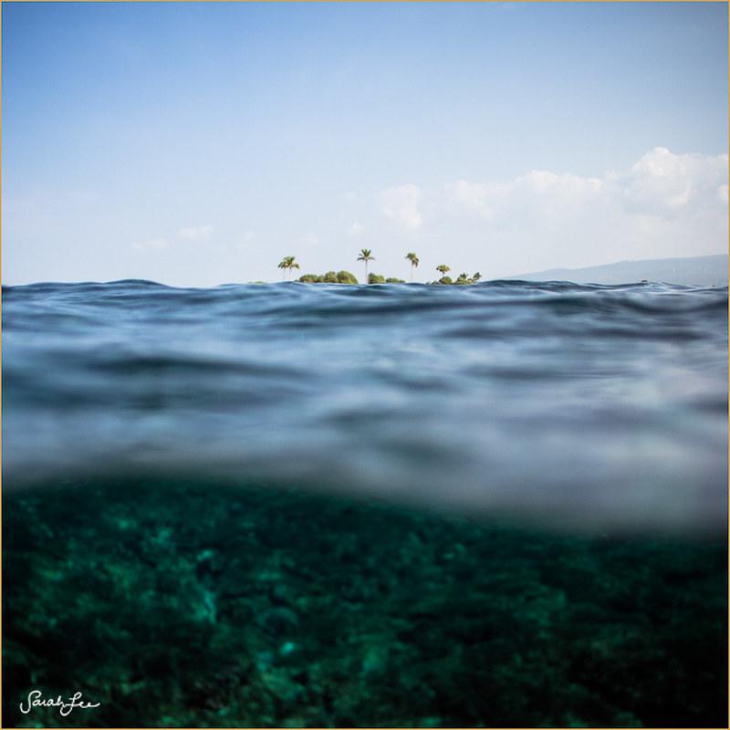014-sarahlee-palm_trees_paradise.jpg