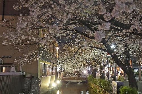 【写真】2014 桜 : 木屋町通/2021-09-17/IMGP5605