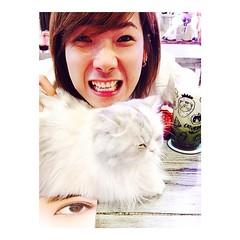 ไอ้หน้าแมว คือแยกไม่ออก ตัวไหนแมวตัวจริง 5555 #caturdaycatcafe #cat #kitten #catstagram #petstagram #thailand_allshots_pets #thaistagram #thaiinstagram