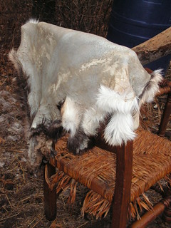 softening fur-on goat hide