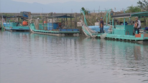鰻魚減少與過漁有直接關係