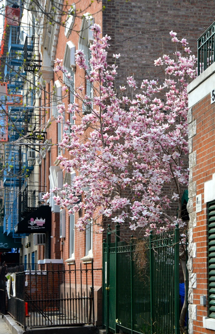 New-York-City-Spring-East-Village-Flowers-My-Style-Pill.jpg
