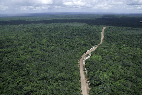 aerial forestcanopy guyana humanimpact road saveyourworld landscape september2007 forest tree aerialview horizontal trees ©ciphotobyjohnmartin