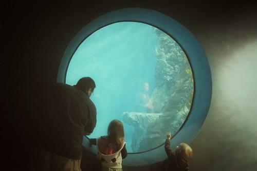 water circle aquarium illinois underwater tank sony round alpha viewing brookfieldzoo a500 thelivingcoast flickrandroidapp:filter=none