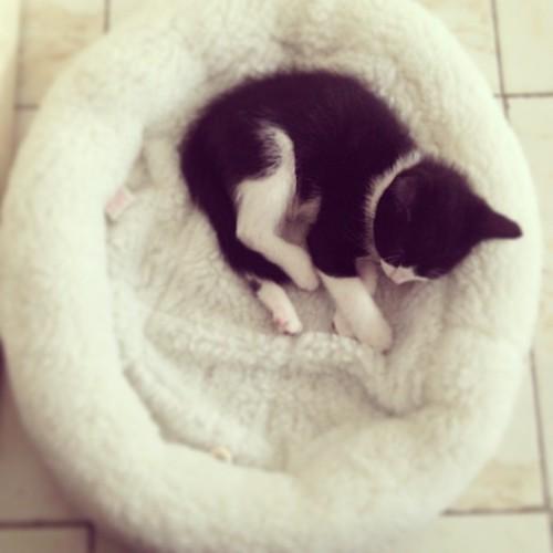 Il sait déjà où est son panier, on est bien ! Prochaine étape : la litière ! ❤ #illico #catstagram