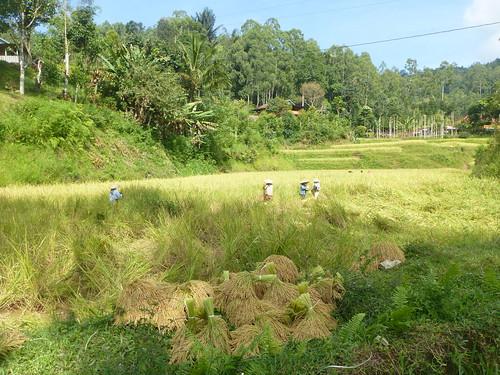 Sulawesi13-Palopo-Rantepao (11)