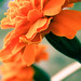 blazing orange_edited by hey-wait-up