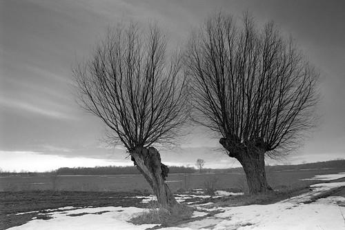 voyage trip sunset bw cloud snow tree field analog 35mm landscape spring europa europe dusk poland polska pole negative willow journey analogue reise wiosna wielkopolska canoneos300v rolleiretro100 wierzba travet grzybno bwfp