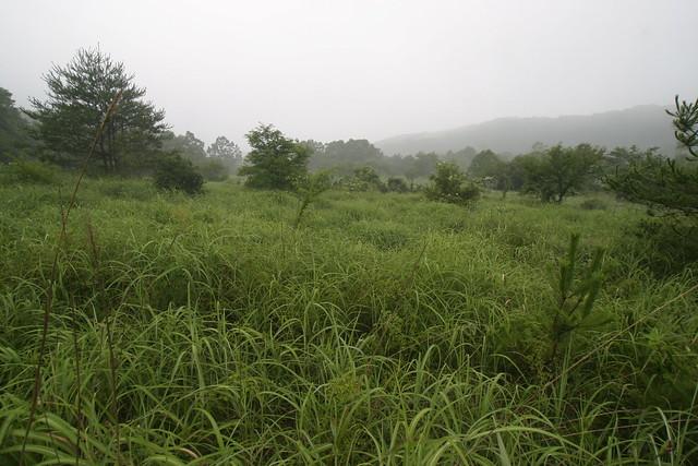 草刈り前の状況.アカマツやノイバラが入ってきている草原.