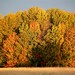 Fall foliage at Missisquoi National Wildlife Refuge