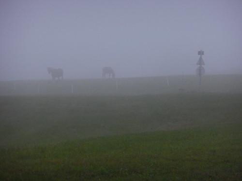 Chevaux dans le brouillard matinal, Saales, Bas Rhin