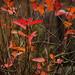 Fall | 14. Leaves
