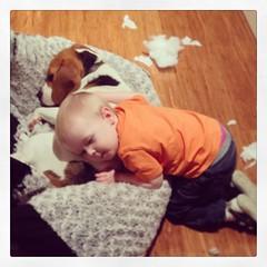 Child Adores Dog