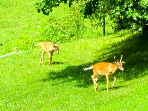 gary scott deer