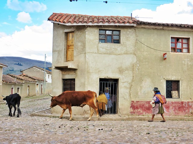 Woman walks her cows in Morado