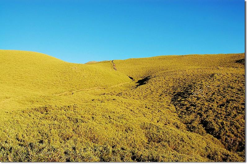 奇萊南峰箭竹坡 9