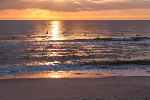 Pelicans in Flight, Kure Beach North Carolina