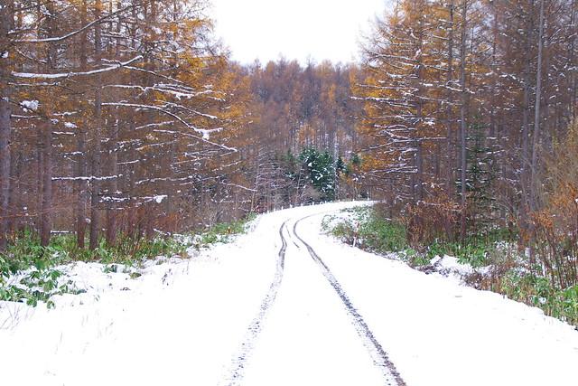 カラ松の路