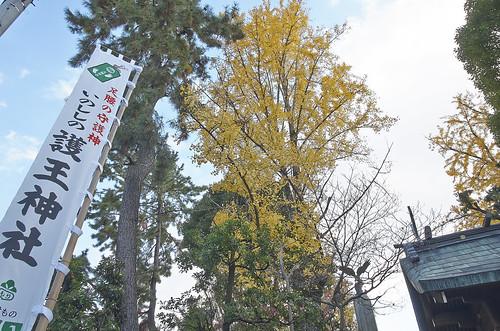 【写真】紅葉 : 護王神社