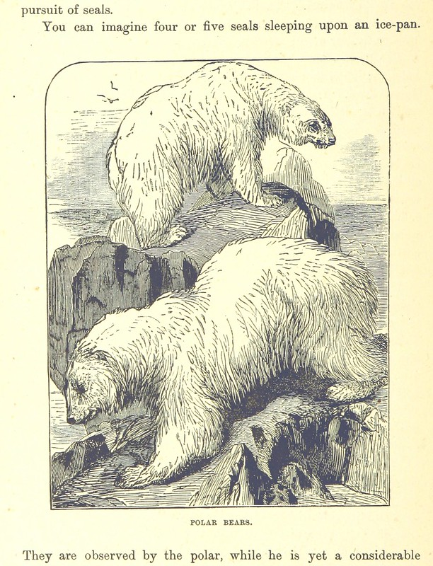 Image taken from page 200 of 'Our North Land: being a full account of the Canadian North-West and Hudson's Bay Route, together with a narrative of the experiences of the Hudson's Bay Expedition of 1884 ... Illustrated, etc'