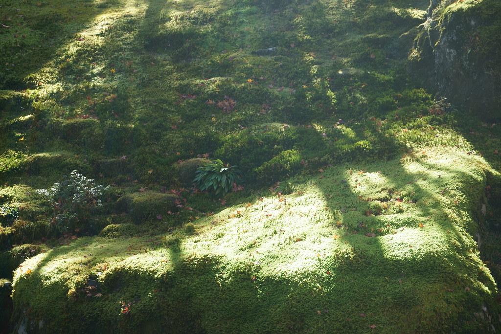 苔、光さす。