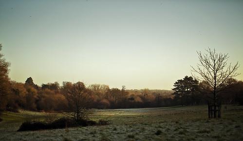park trees cold tree ice grass forest sunrise frozen woods warm view hill meadow farnham canon5dmarkiii