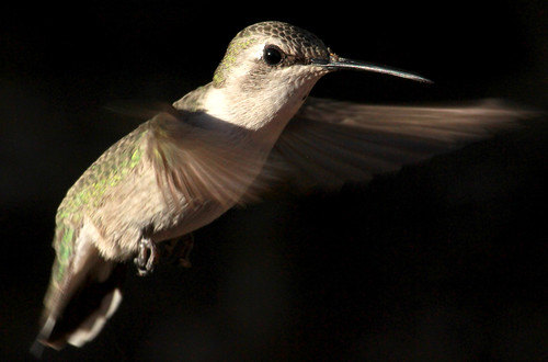 143172-1.jpg by Robert W Gilcrease