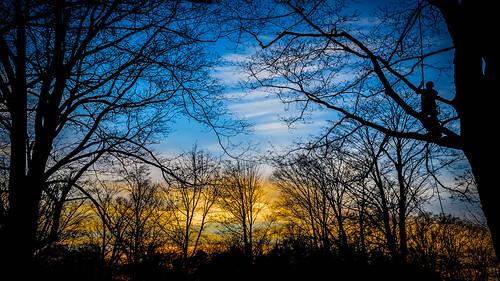trees sunset silhouette maitlandcemetery