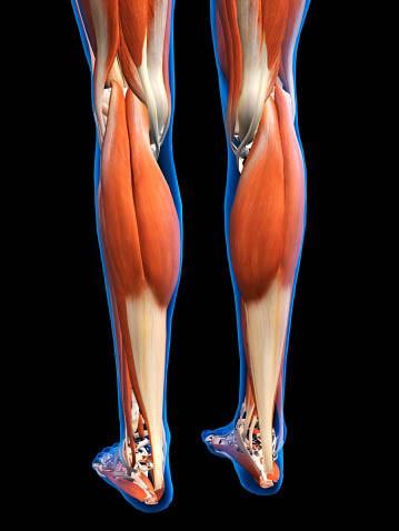 Blog de Antonio Gil: Lesiones en el gemelo