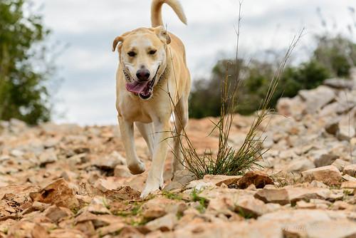 pets dogs animals israel north naturelandscape haluts