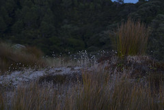Dawn Photos, Otama, Feb, '14