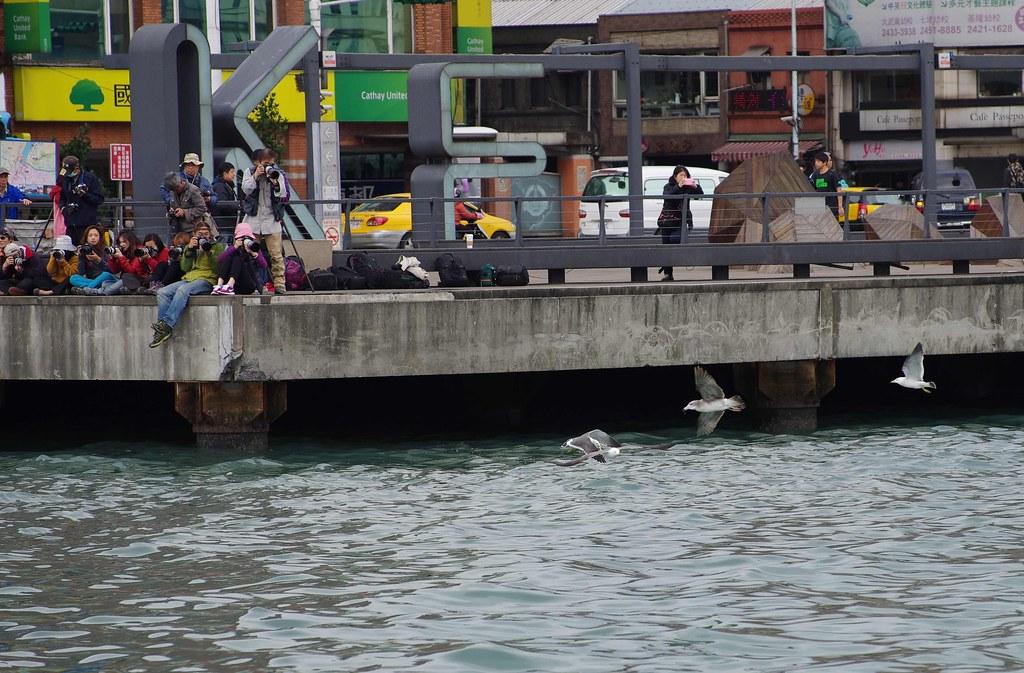 這幾天基隆港也出現不少海鷗....