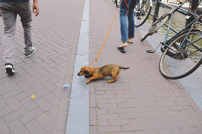 Amsterdam_2013_ 242