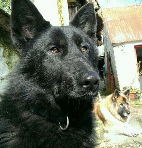 Mon, Mar 24th, 2014 Lost Male Dog - Dundalk To Carrickmacross Road, Channonrock, Louth