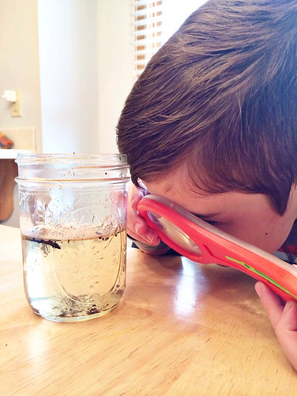 Studying pond water