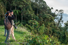 last chance for birding, Chicaque National Park lookout