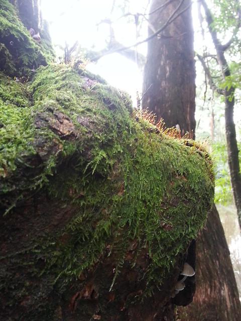 Header of hairy moss