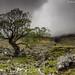 Glen Etive Tree by .Brian Kerr Photography.