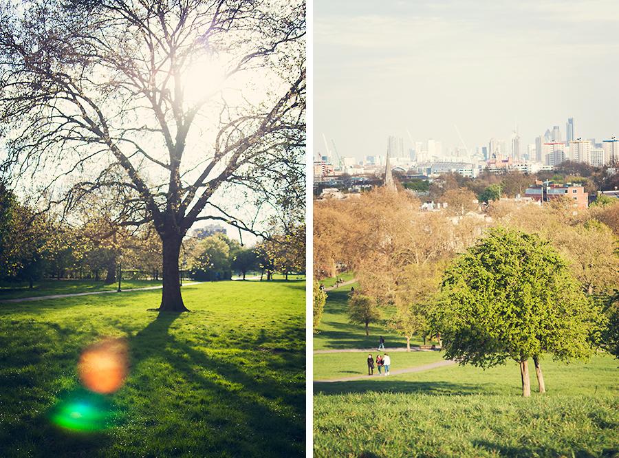 London_tree