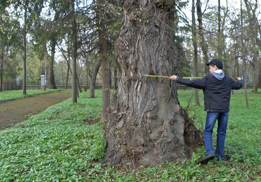 Старі дерева — як історичні пам'ятки