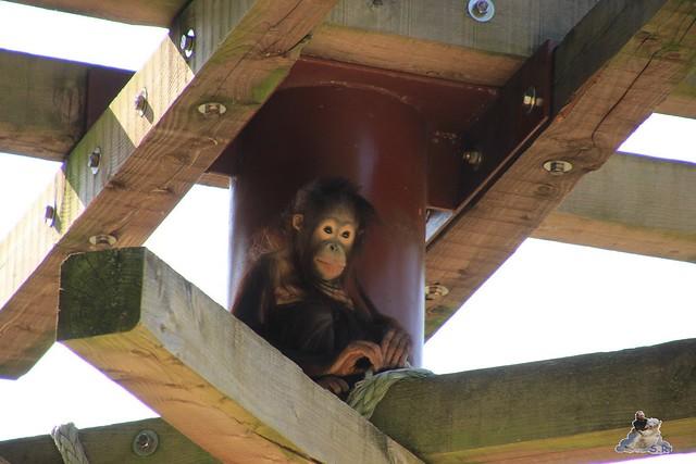 ouwehands dierenpark 30.06.2015  4
