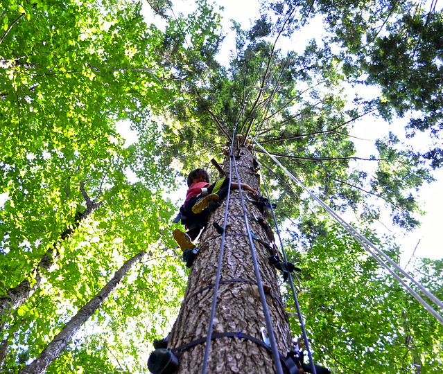 tree climbing course - Arbor Trek Smugglers Notch, Vermont