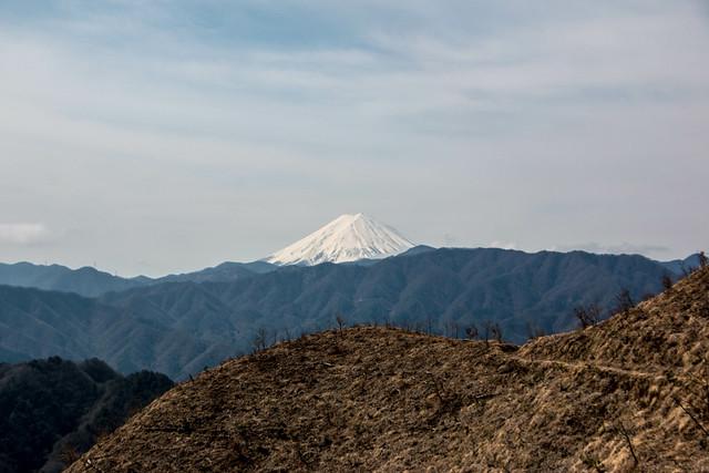 20150412-甲州高尾山-0134.jpg