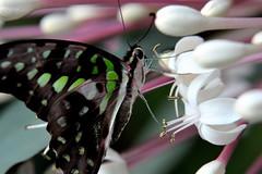 Papillons en Liberté 2017 - Photo 34