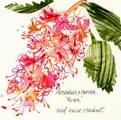 J C Raulston arboretum illustration